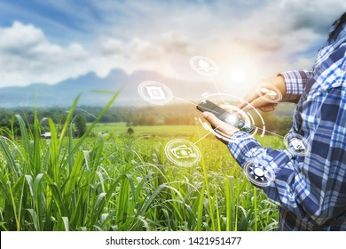Innovation technology for smart farm system, Agriculture management, Hand holding smartphone with smart technology concept. asian male farmer working in Sugarcane farm To collect data to study.