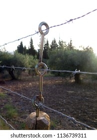 Innovative barbed wire fence support around olive grove in Andalusia