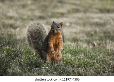 Inquisitive Little Squirrel