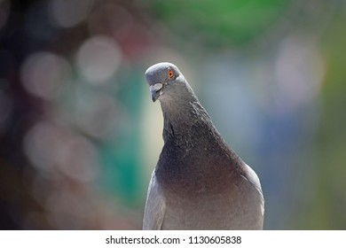 Inquisitive pigeon on a ledge, on a bright sunny day with a blurred background.