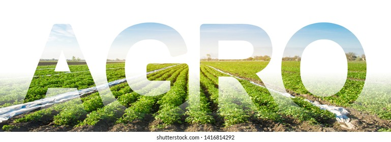 The inscription Agro on the background of a potato plantation field. Agribusiness and agro-industry. Agriculture. The use of innovative technologies, equipment and fertilizers. Beautiful landscape
