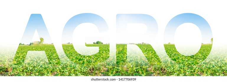 The inscription Agro on the background of a potato plantation field. Agribusiness and agro-industry. The use of innovative technologies, equipment and fertilizers. Beautiful landscape. Agriculture.