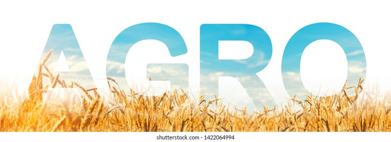 The inscription Agro on the background of a wheat plantation field. Agribusiness and agro-industry. The use of innovative technologies, equipment and fertilizers. Beautiful landscape. Agriculture.