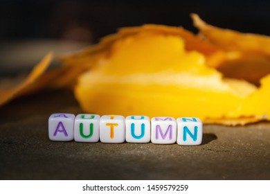 The inscription autumn is collected from cubes with letters and lies the road next to the leaves in the rays of the sun