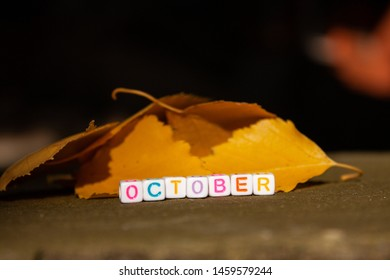 The inscription October is collected from cubes with letters and lies the road next to the leaves in the rays of the sun