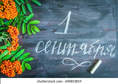 """Inscription in Russian """"September 1"""" with Rowanberry leaves and berries on a wooden background. Greeting gift card for the day of knowledge. Hand lettering."""
