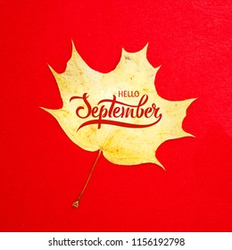 """Inscription in Russian """"September 1"""" with yellow autumn maple leaf  on red background. Greeting gift card for the day of knowledge. Hand lettering Hello September."""