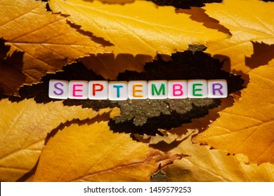 The inscription September is collected from cubes with letters and lies the road next to the leaves in the rays of the sun