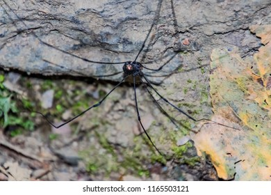 Insect bamboo spider ecological environment landscape