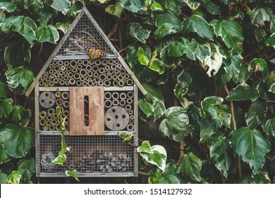 An insect / bug hotel hung on an ivy covered wall in an English country garden. A painted lady butterfly is resting on the wooden front.