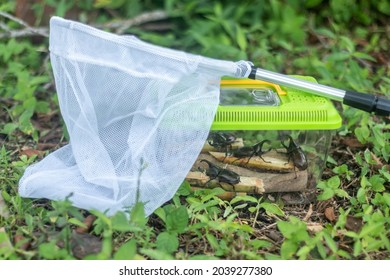 insect cage and insect catching net for hobby of insect lover