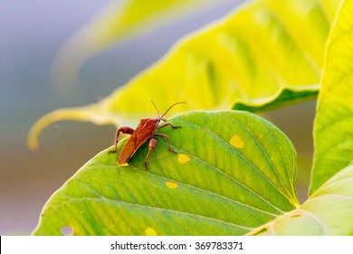 insect eating leaf