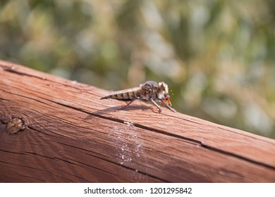 Insect eating on a wood.