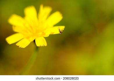 Insect at the edge of a yellow flower petal.