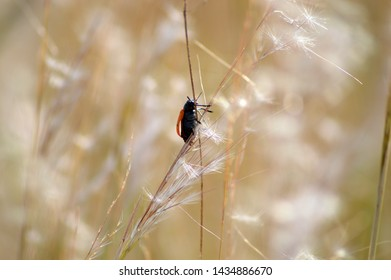 Insect in field spike in summer