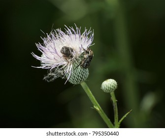 Insect holding on to blooming wild flower.