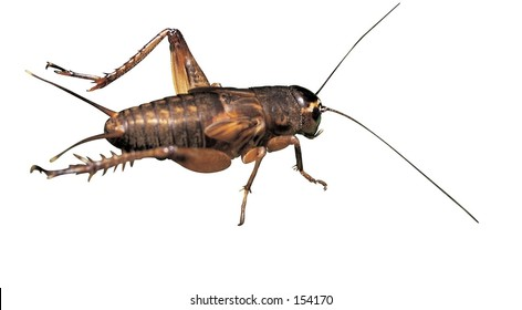 Insect Image