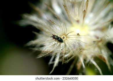 Insect on grass flower