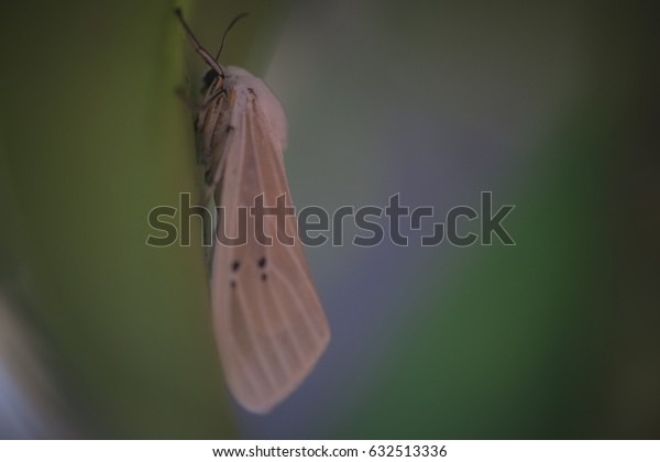 Insect on a green background