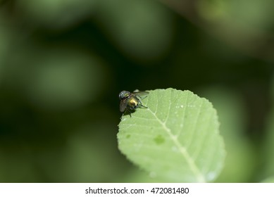 Insect on green leaf macro photography