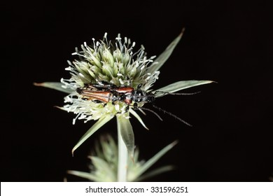 insect perched on a plant with dark background