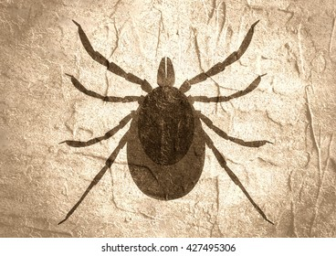 tick insect images stock photos vectors shutterstock. Black Bedroom Furniture Sets. Home Design Ideas