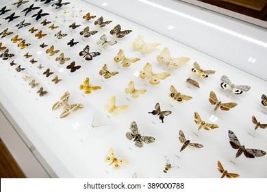 Insect specimen