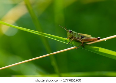 Insect standing between green geometries