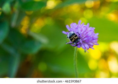 An insect sucking nectar from a flower.
