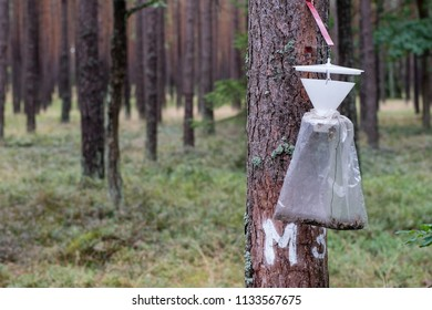 An insect trap hung on a tree trunk. Destruction of forest pests. Season of the summer.