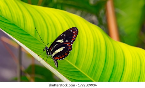 Insect, Wildlife, Germany - A large butterfly in the botanical garden in Marburg.