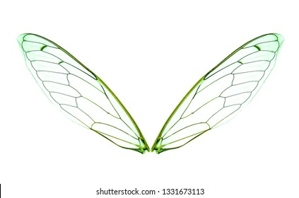 Insect wing isolated on white background