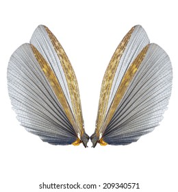 insect wings