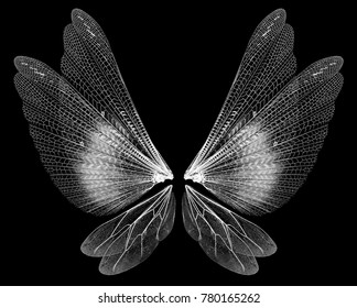 Insect wings isolated on black background
