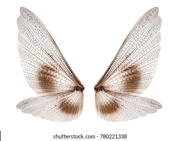 Insect wings isolated on white background