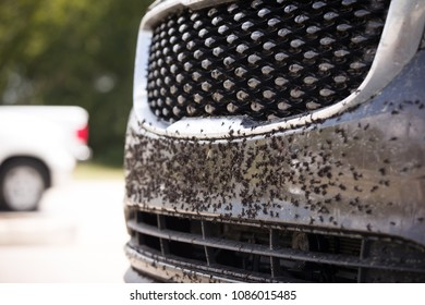 insects and black-flies on front of a car before washing. midges