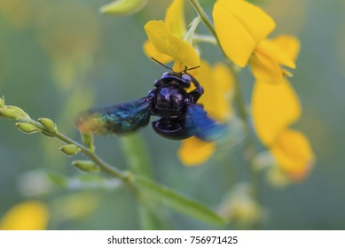 Insects are blending yellow flowers.