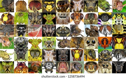 Insects. Close up
