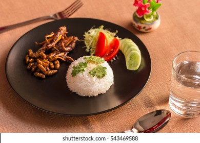 Insects - Grasshoppers fried insect on Sushi rice with brown ceramic plate. Insects are high in protein and used to cook. It is preferable for the people of Cambodia and Thailand. Select Focus.