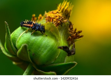 Insects Habitating in Wild Plants: Photo Close-up of Arthropod Family