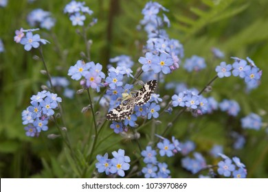Insects of Siberia, Russia. Spider eating butterfly.