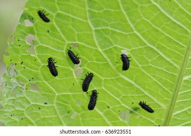 Insects that eat leaves