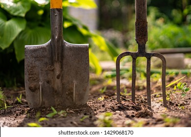 inserted shovel and pitchfork into the ground in the garden