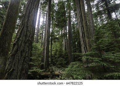 inside cathedral grove forest