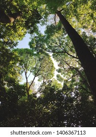 inside a florest, with trees and sky