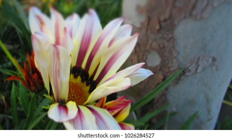 Inside Flower, Minature - Turkey