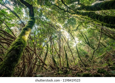 inside forest, magical ambience of Anaga cloud forest ,