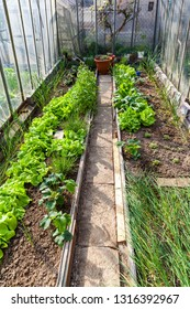 Inside of greenhouse with vegetables and herbs - gardening