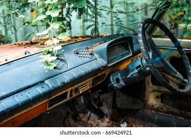 Inside interior of rusty wrecked european car in thai natural