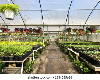Inside a large greenhouse in a wholesale nursery filled with flowers, hanging plants and fresh organic herbs and vegetables.